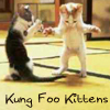 kitzen_kat: kung foo kittens (Default)