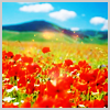 kiwibikini: ([frruity_taste Poppies)