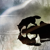 ext_47: a wolf looking at reflection in a lake (BSG -- Sharon)