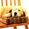 renitaleandra: (Puppy + Book)
