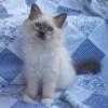 meirwen_1988: (Tag kitten)