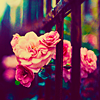paintasmile: (pretty roses)