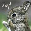 bradygirl_12: (bunny (yay!))