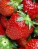 bradygirl_12: (strawberries 1)