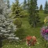 bradygirl_12: (trees and flowers 1)