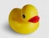 bradygirl_12: (rubber duckie)