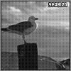 seabird: (seabird)