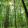 quesera: (Forest)