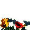 misscam: (Flowers)