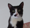 rhythmaning: (cat)