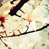 sterni75: (stock: flowers white)