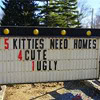 notemily: (misc - 5 kitties need homes)