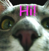 kelliem: Kitty hi (hi)