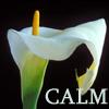 kelliem: White lily (calm)