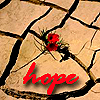 kelliem: flower in the desert (hope)
