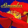kelliem: poppy (remember)