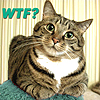 kelliem: annoyed kitty (wtf)