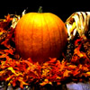 kelliem: pumpkin (pumpkin)