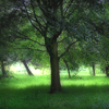 kelliem: tree & lawn (green)