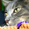kelliem: Closeup of Riku-kitty (riku's eyes)