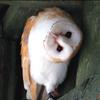 kelliem: owl w/ head cocked (say what?)