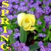 amylynnesq: (Spring!)
