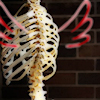 delight: skeleton (rib-centric) with doodled wings (angel of death)