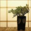 stirring_still: (zen plant)