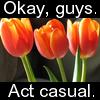 laligin: (Tulips)