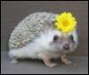 dine: (hedgeflower)