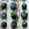 songbird: six blueberries, lined up in a grid (blueberries)