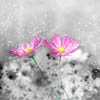 flower_envy: (flowers)