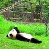 justfornow: ([Stock] {Panda} Contemplating)