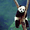 justfornow: ([Stock] {Panda} Tree-straddle)