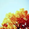 justfornow: ([Stock] {Autumn} Tree is turning)