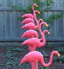 supergee: (flamingo)