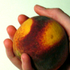 to_tell_you_all: (♖ do i dare to eat a peach)