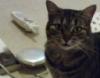 djkittycat: (Lucy)