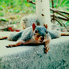 strangefrontier: (animals : chillin' squirrel)