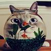 proskynesis: (misc: goldfish bowl)
