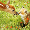 not_a_sniglet: A fox and a deer touching noses. (Default)