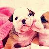 purapea: (misc; puppykisses)