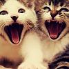 purapea: (misc; kitten; aaaaaaaaa!!!)