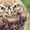 purapea: (misc; owl; oh fuck right off)