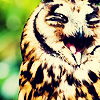 purapea: (misc; owl; LOL)