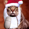 akacat: A cat holding a computer mouse by the cord, wearing a stocking cap. (cat & mouse Santa'd)
