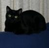 mrs_sweetpeach: (Black cat)