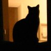 mrs_sweetpeach: (Back-lit black cat)