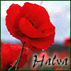 halva: (poppy)