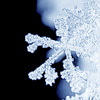 musesfool: image of a snowflake (nothing but winter in my cup)